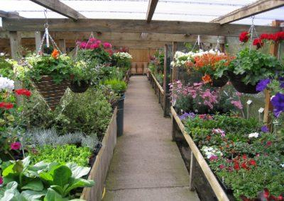 Pinecove Nursery, Tenterden Kent.