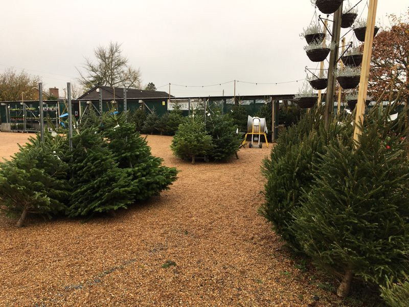 Pinecove Nursery Christmas Opening 2020